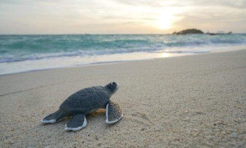 Alerte - les tortues subissent un trafic inquiétant !