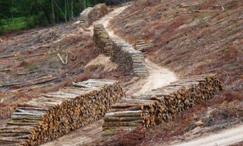 NON à la piste forestiére à LAVAULT de FRETOY (58230)