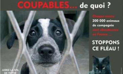 Pour une entière prise en charge des frais de l'opération de castration des chiens