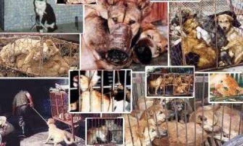 Interdire la vente d'animaux domestiques en ligne, dans les animaleries et dans les élevages et n'autoriser que les refuges à vendre des animaux.