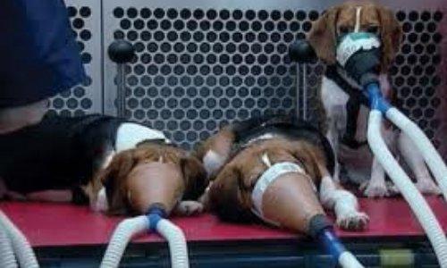 Pétition : Pour interdire au niveau international l'expérimentation animale dans tous les secteurs