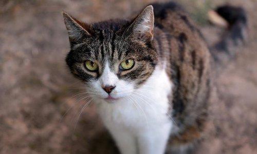 Obligation légale de la stérilisation des chats en France