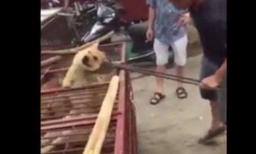 Stop à la tuerie des chiens