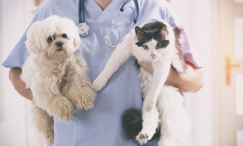 Diminuer la TVA sur les soins au niveau des vétérinaires
