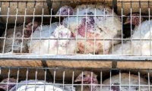 Stop à la souffrance animale, un animal est un être vivant