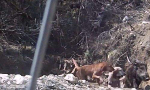 Contre les entraînements des chiens dans un parc de chasse ou enclos