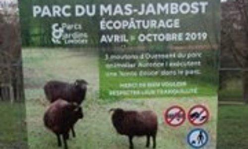 NON AUX MOUTONS DE L'ECOPATURAGE DU MAS JAMBOST PRES DE LIMOGES 87