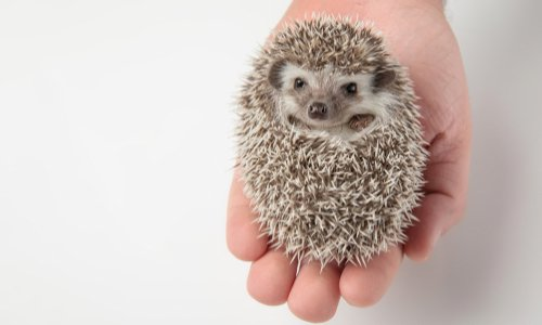 Pétition : Stop aux animaux mis en scène sur les réseaux sociaux