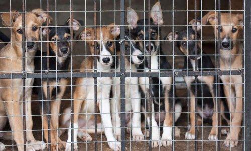 Pétition : NON à la vente aux enchères de 300 chiens en Mayenne !