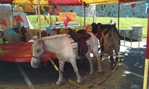 Contre le carrousel de poneys vivants à la fête foraine du Neubourg