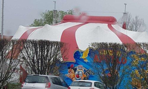 Interdiction des cirques avec animaux sur Mundolsheim