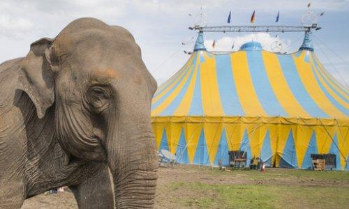 Contre les cirques avec animaux à Verrières-le-buisson