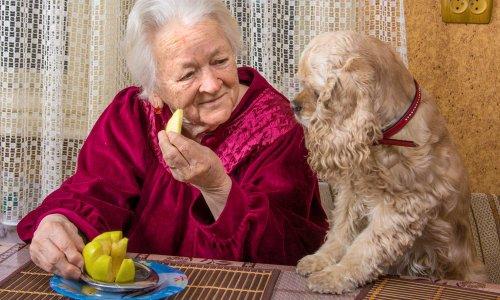 Pétition : Pour un accueil des patients AVEC leurs animaux dans les EHPAD et maisons de retraite