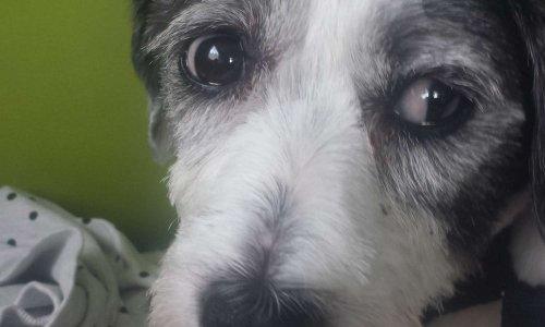 Signer contre la maltraitance des animaux