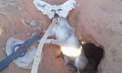 Halte à la torture des animaux au Sahara tunisien