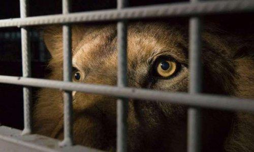 Pétition : Non aux cirques avec animaux sauvages au Perray en Yvelines