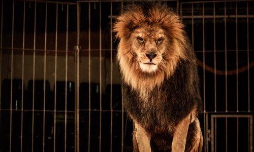 Contre les cirques avec animaux à Allonnes