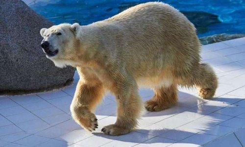 Pour l'amélioration des conditions de vie des animaux (zoos)