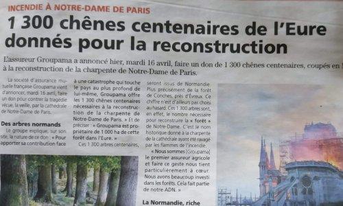 Pétition : Sauvons 1300 arbres centenaires destinés à la reconstruction de la charpente de Notre-Dame