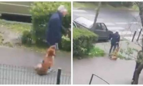 Contestation du classement sans suite : chien étranglé, secoué, frappé au sol et traîné par son maître dans une rue d'Argenteuil le 23 avril 2019