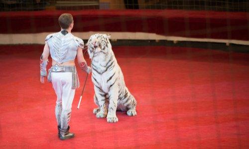 Pétition : Interdire les cirques exploitant des animaux à Franconville