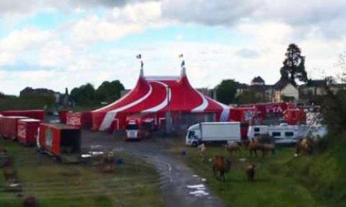 Stop aux cirques avec animaux sauvages dans la ville de Mayenne !