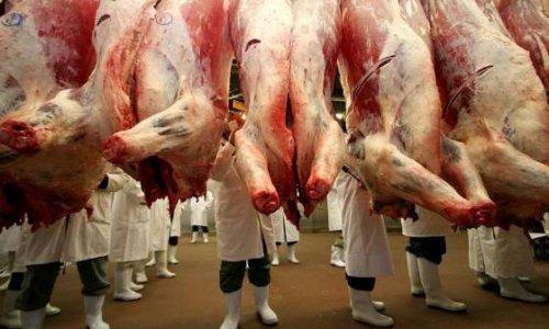 Pétition : Stop aux abattoirs