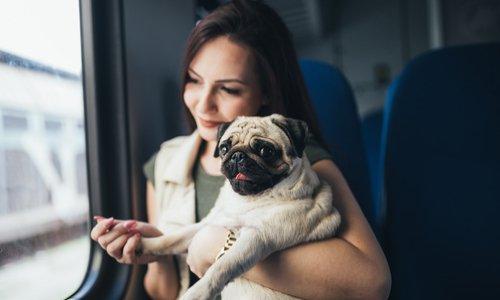 Pour que les animaux soient acceptés sur l'abonnement TGV max
