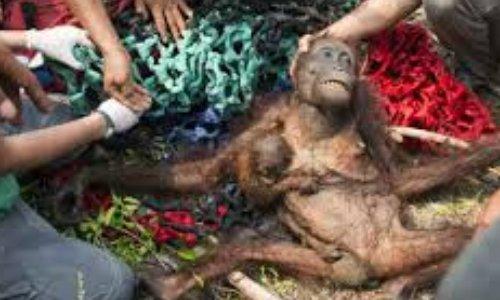 Pétition : Boycottez tous les produits contenant de l'huile de palme