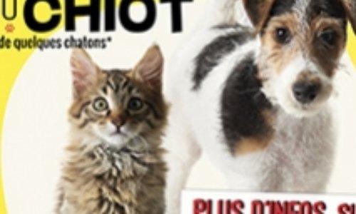 """Salon du chiot et du chaton : contre l'achat """"impulsif"""" d'animaux"""