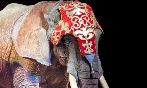 Contre la venue du cirque Muller (avec animaux) à Bagnères-de-Bigorre et Pouzac