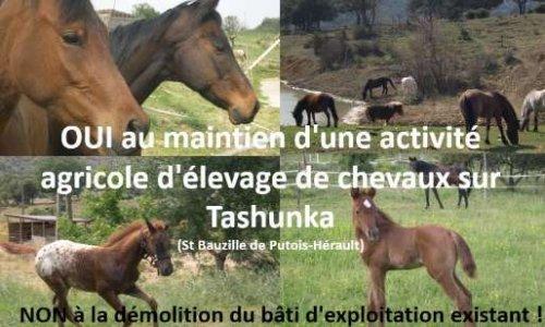 OUI au maintien d'une activité agricole d'élevage de chevaux sur Tashunka, NON à la démolition du bâti d'exploitation existant