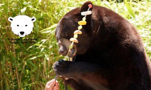 Pétition : Non au spectacle d'ours à la VIème fête Gallo-Romaine de Châteaubleau