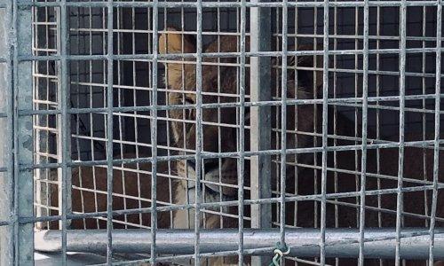 Stop à l'accueil des cirques avec animaux à Saint-Jorioz