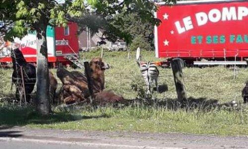 Non à l'accueil des cirques avec animaux à Orchies.