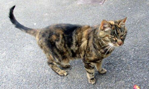 Justice pour notre chat Zézé tué par 2 chiens tueurs.