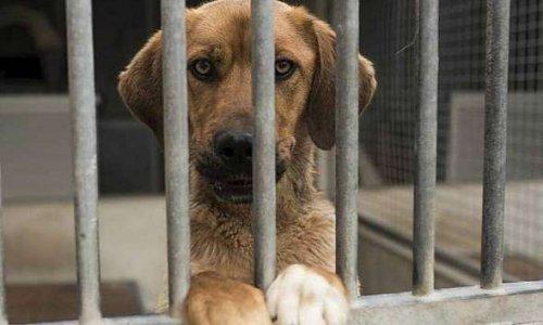 Interdiction à la vente d'animaux dans les animaleries