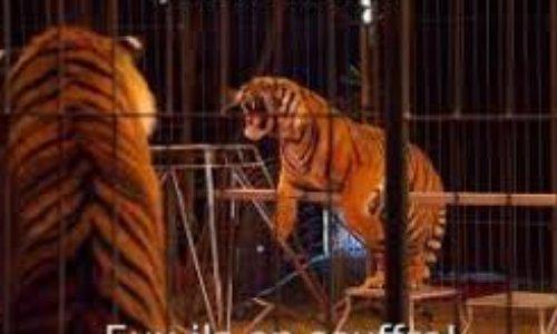 Plus de cirques animaliers sur les parkings Auchan