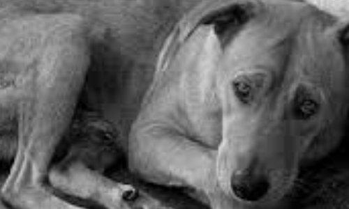 Respectez vos obligations vis à vis des divagations animales sur notre commune