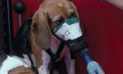 NON à l'exploitation des animaux pour tester la cigarette