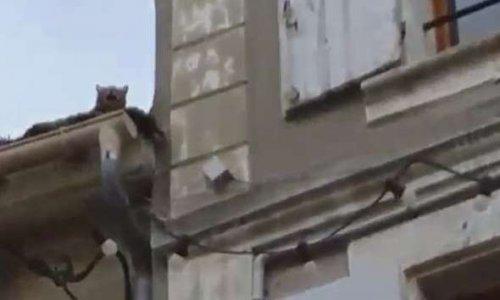 Sauvons un chat prisonnier sur un toit à Agen