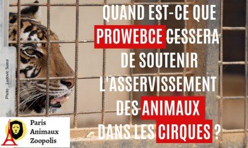 PROWEBCE arrête de proposer des places subventionnées de cirques avec animaux