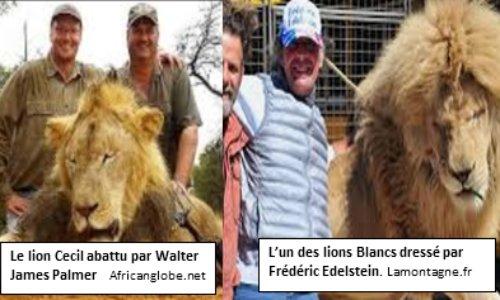 Non aux cirques avec animaux à Saint Pourçain sur Sioule