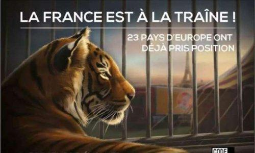 Pétition : Plus de cirques avec animaux sur notre commune