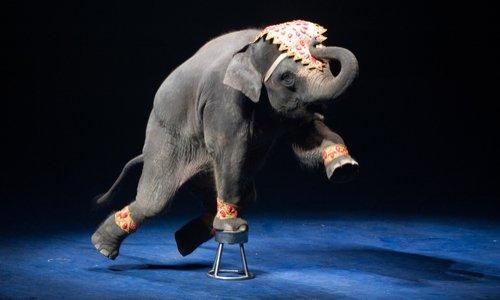 Contre les cirques avec animaux à Sainte-Geneviève-des-Bois