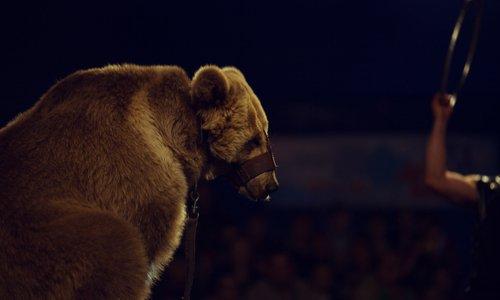 Stoppons la vente de billets de spectacles avec animaux
