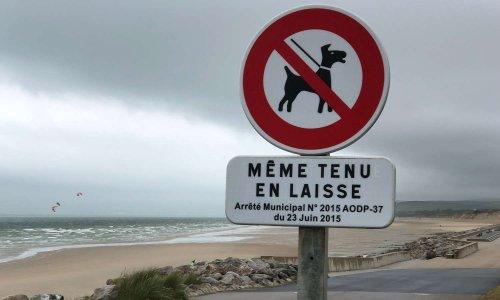 NON aux interdictions systématiques de nos chiens sur les plages