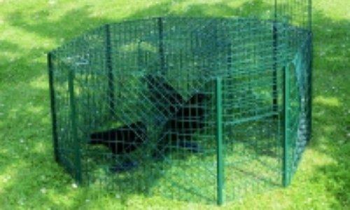 Non aux pièges à corneilles dans nos jardins de Jodoigne