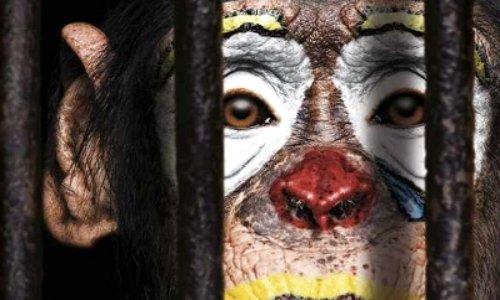 Interdiction des cirques avec animaux à Reichshoffen