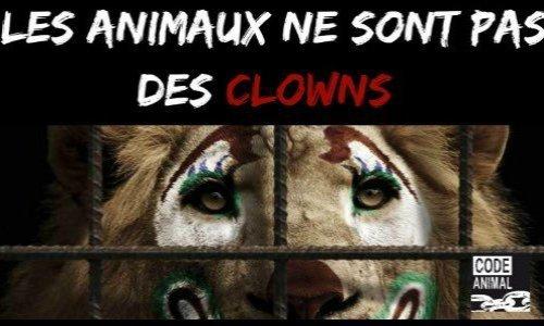Pour interdire la souffrance animale dans notre belle ville de Chalon-sur-Saône